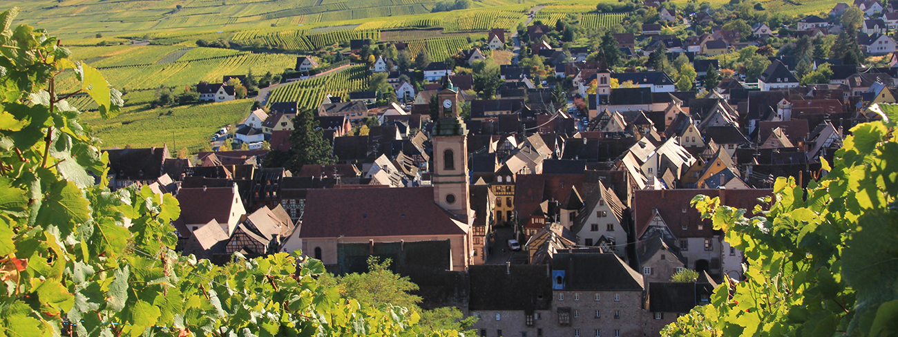Jean Frederic Hugel: ALSACE: FRUIT & TERROIR SIDE BY SIDE