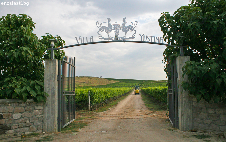 "TASTING PACKAGES IN VINEYARD ""VILLA YUSTINA"